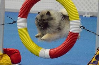 Agility - Tire Jump