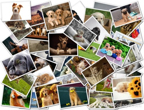 our_furry_friends_cats_horses_collage_dogs_1680x1050_hd-wallpaper-1482306