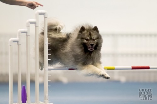 Beau agility On the Run Apl 2012