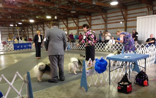 Confirmation Keeshond 2015