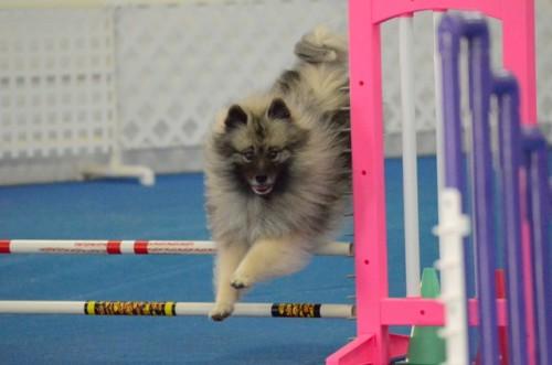 Sadie Jumps Nov. 8 2015