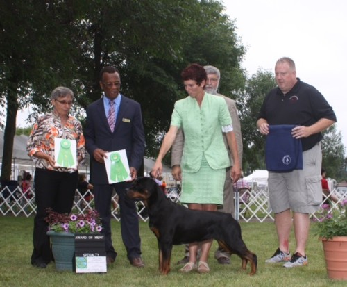 Confirmation Rottweiler