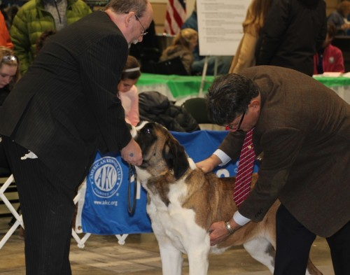 St. Bernard with Judge