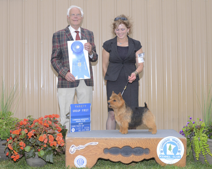 group-win-norwick-terrier