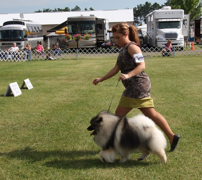 keeshond-in-best-in-show
