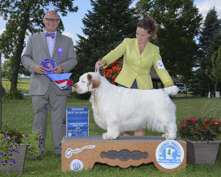 reserve-best-in-show-clumber