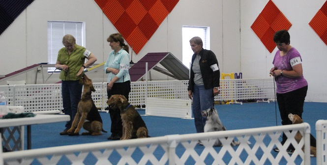 Obedience Group Waiting on Results