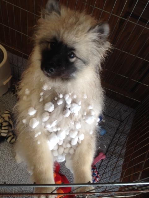 Juniper Snowballs 2.18.14