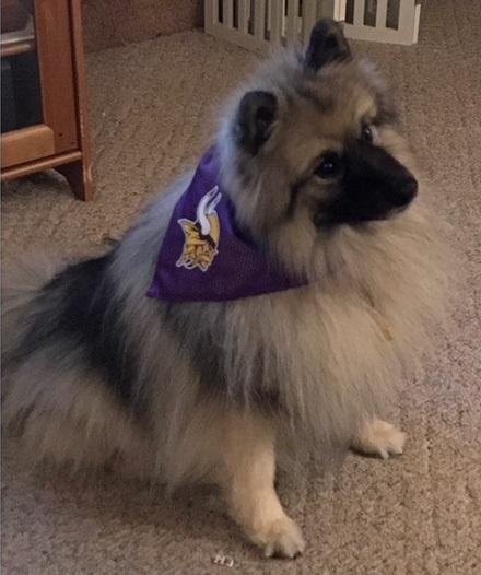 Vikings Fan Ellie 1.2018