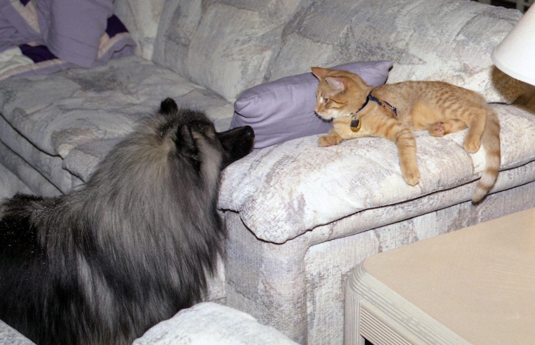 Stormy & Cat 1