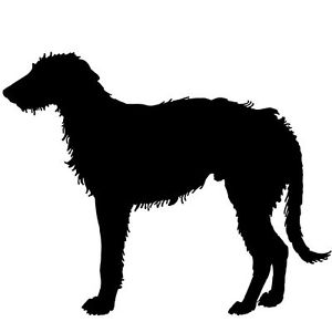 Irish Wolfhound Sil