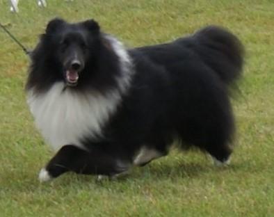 DSC09557 Pup